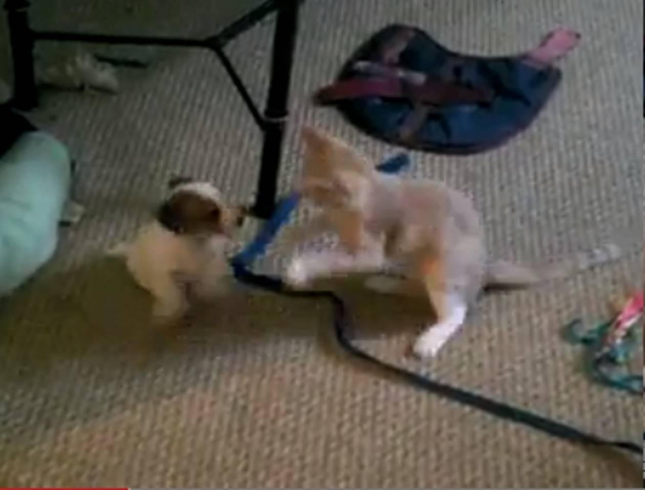 Bίντεο: Δύο κουτάβια «τα έβαλαν» με μία γάτα!