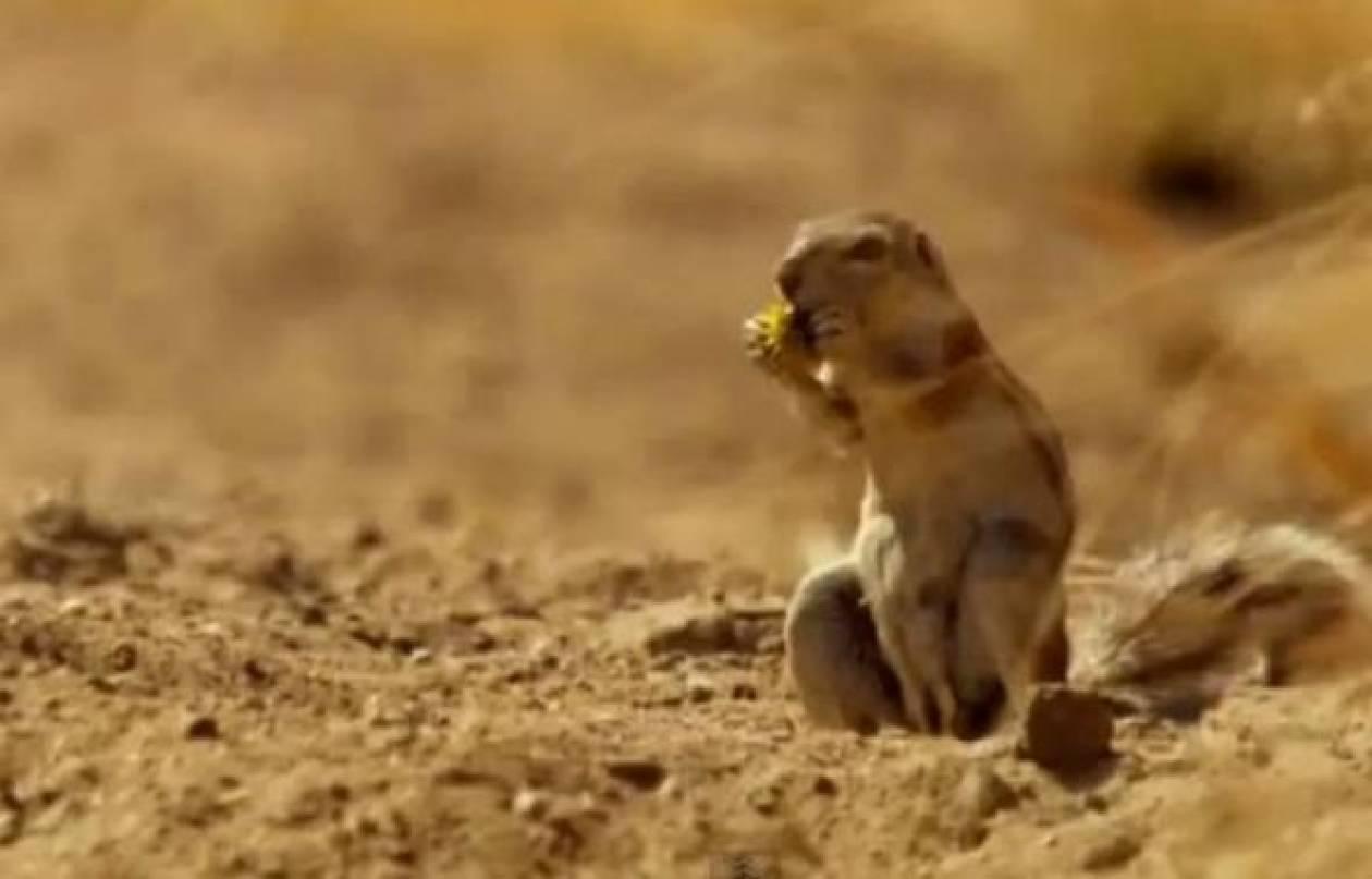 Βίντεο: Δείτε πως αντέδρασε ο σκίουρος όταν αντίκρισε τη λεοπάρδαλη!
