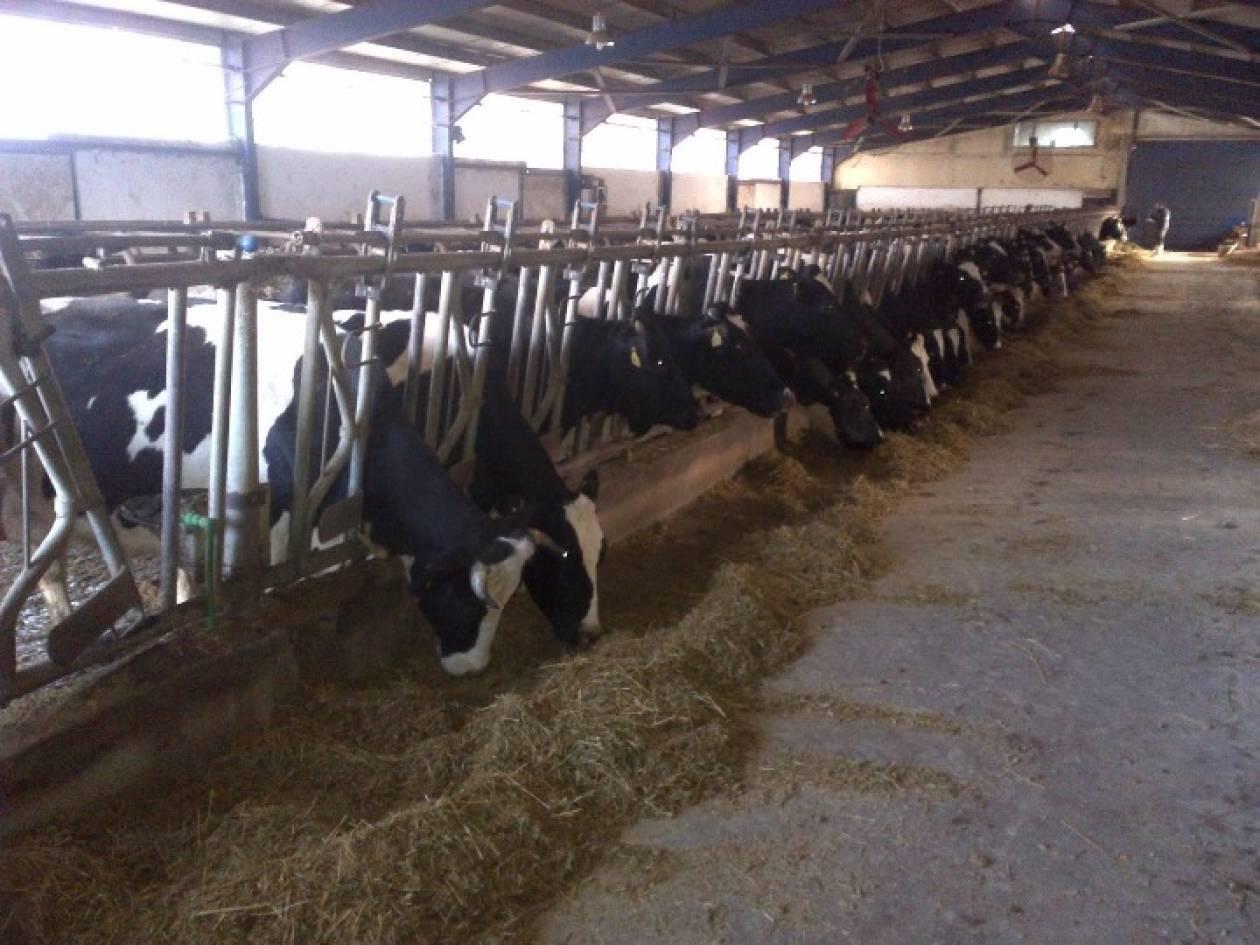«Αργοπεθαίνει» η κτηνοτροφία στην Ηλεία!