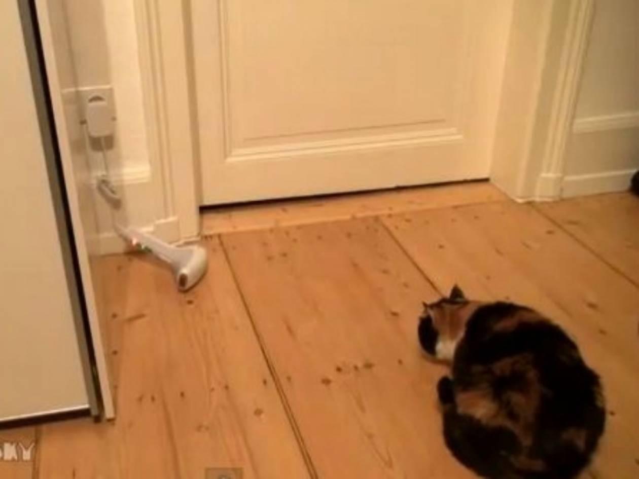 Απίθανο βίντεο: Ο πιο φοβιτσιάρης γάτος του κόσμου