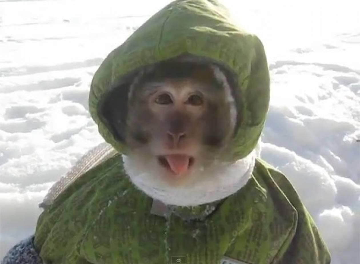 Βίντεο: Η μαϊμού έτοιμη για τα χιόνια...