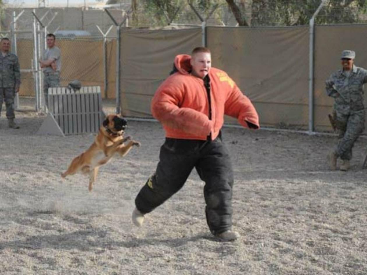 Στιγμές τρόμου: Εκπαιδεύοντας έναν σκύλο (pics)