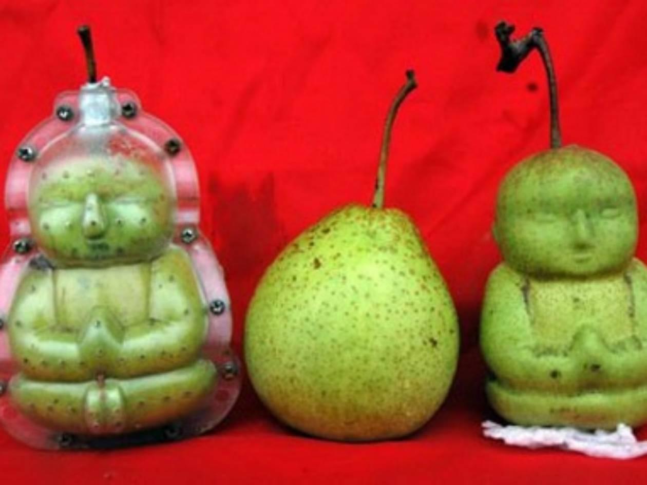 Αχλάδια με …ανθρώπινη μορφή! (pics)