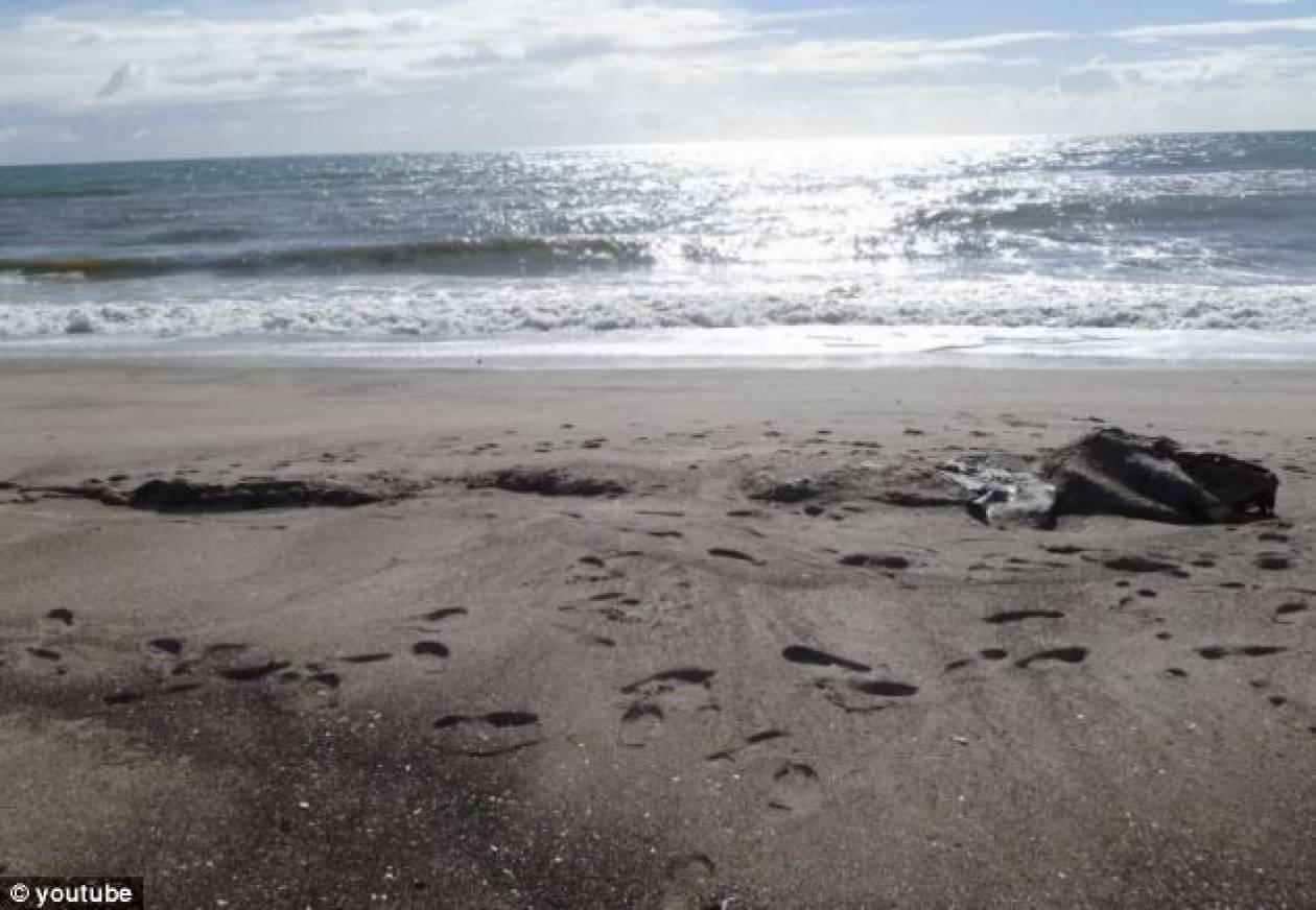 Μυστήριο με το τερατώδες πλάσμα που βρέθηκε σε παραλία (pics)