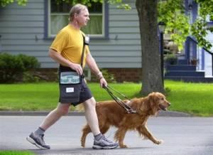 Συγκινητική ιστορία: Δυο τυφλοί ερωτεύτηκαν χάρη στα σκυλιά τους