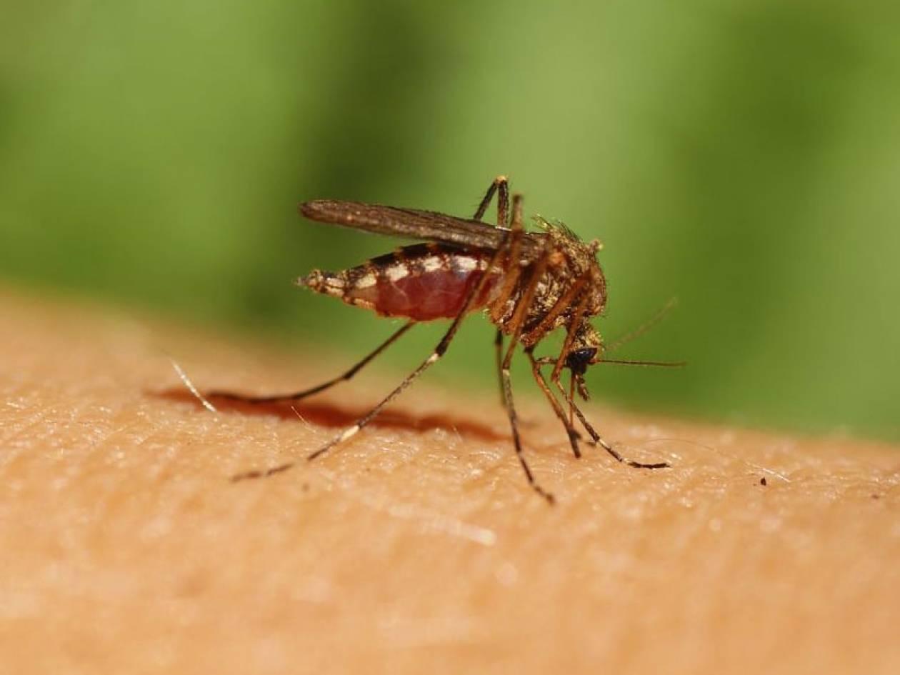Δύο ακόμη κρούσματα του ιού του Δυτικού Νείλου