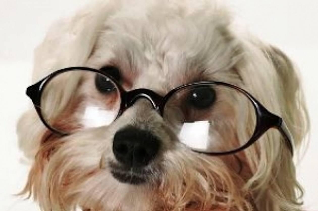 Ένας μύθος διαλύεται: Τα σκυλιά τελικά βλέπουν χρώματα;
