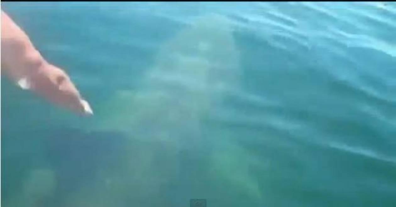 Βίντεο: Βούτηξε πάνω σε… καρχαρία!