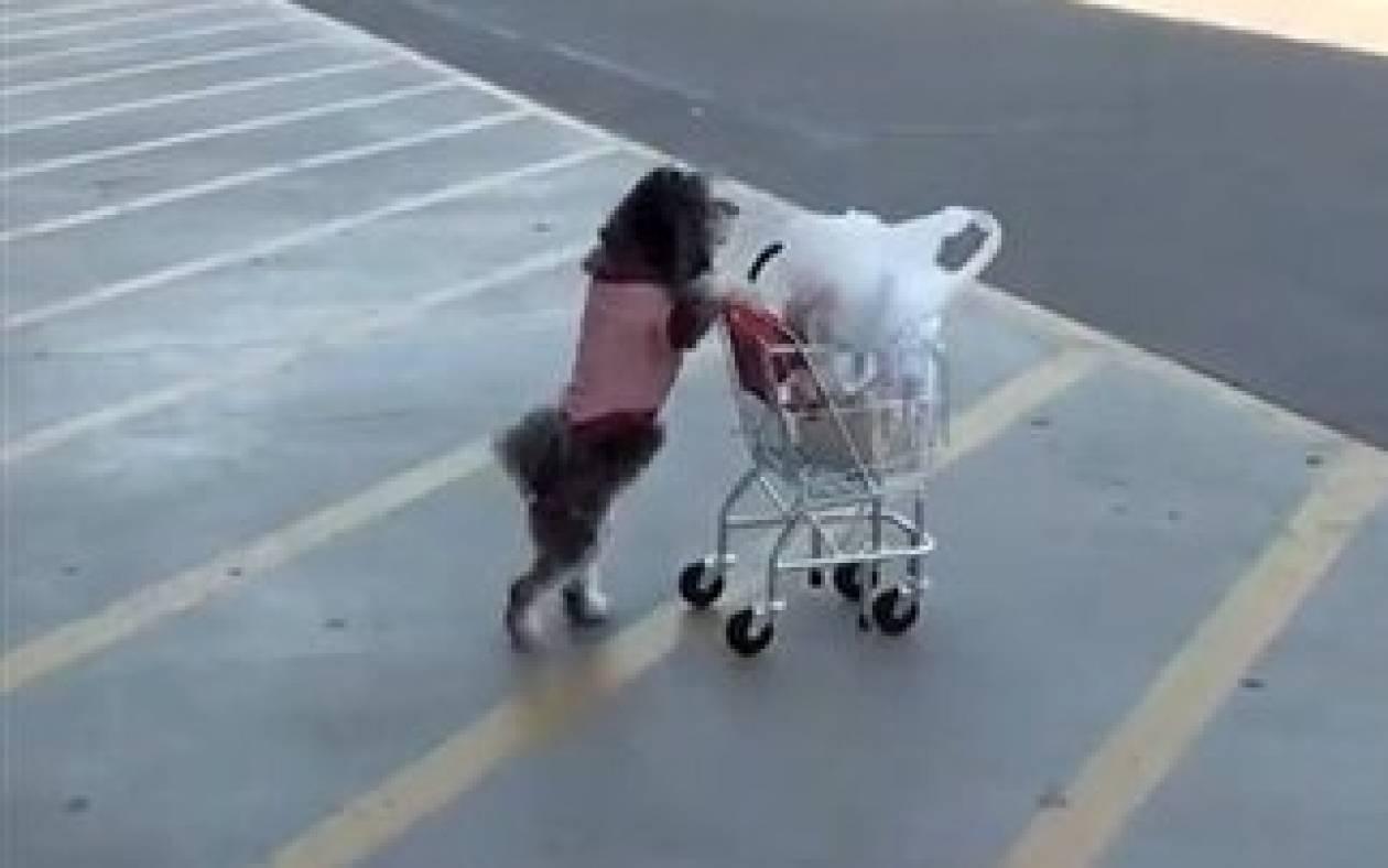 Κορυφαίο βίντεο: Σκύλος για όλες τις δουλειές
