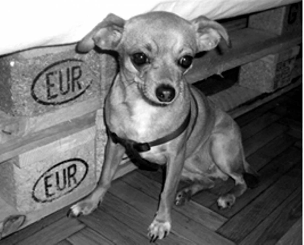 Εξάρχεια: Χάθηκε η Ζιζέλ