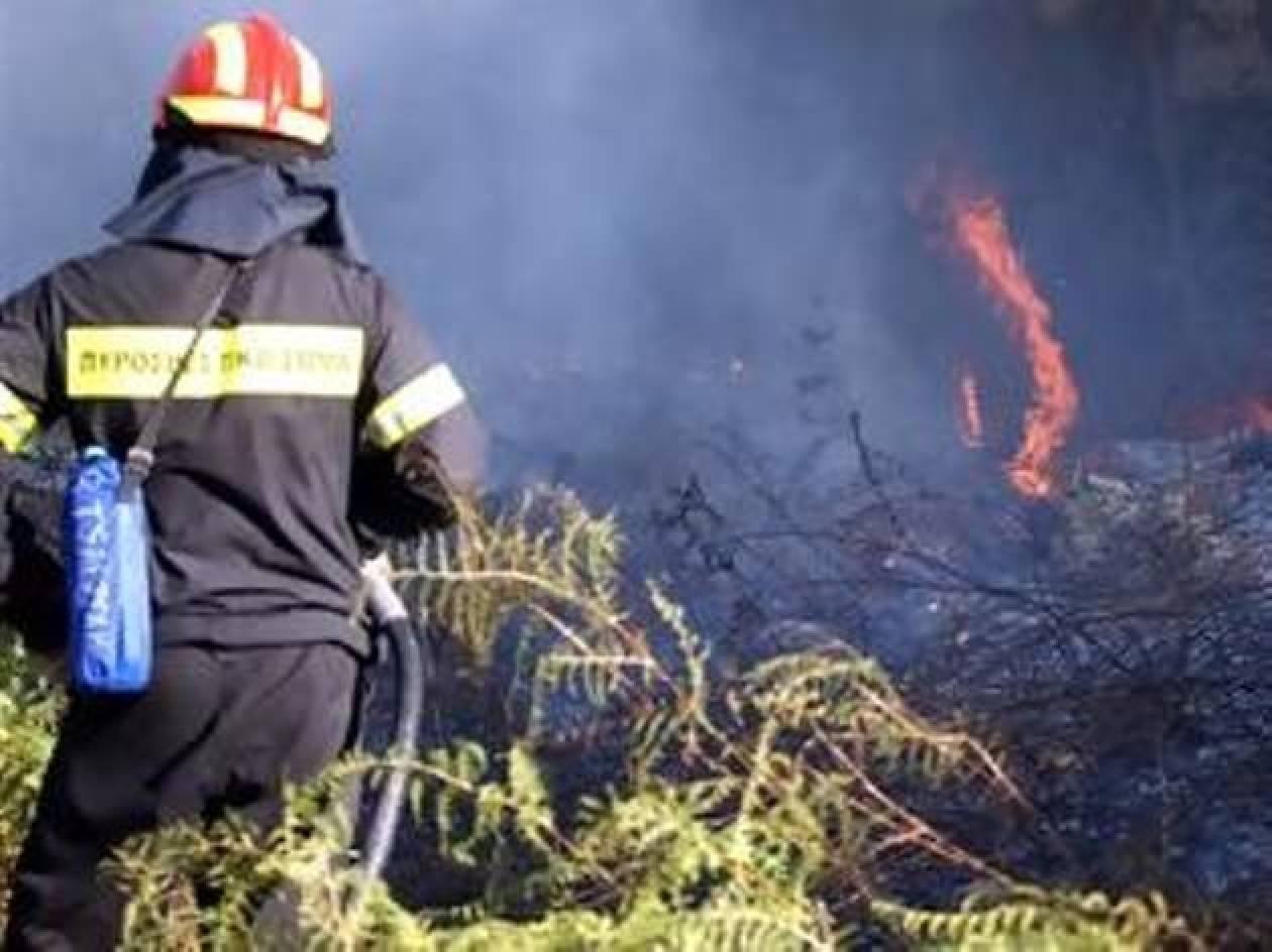 Υπό μερικό έλεγχο η πυρκαγιά στην Επίδαυρο