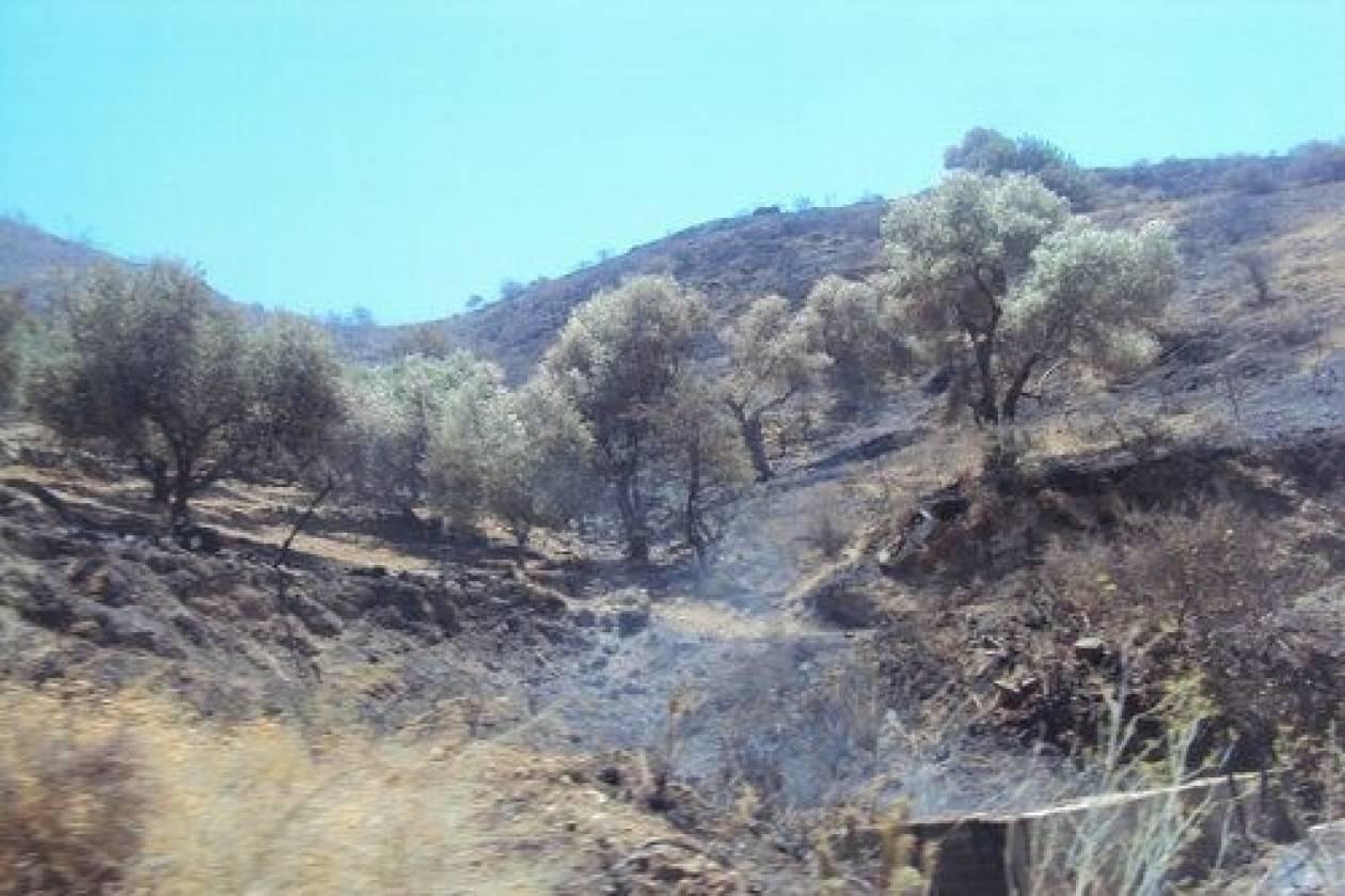 Κρήτη: Σε ύφεση η φωτιά στη Μεσαρά