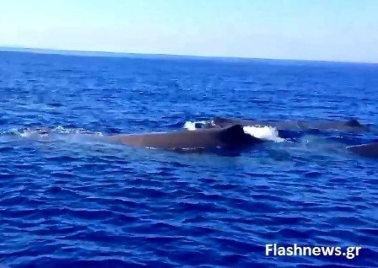 Φανταστικό βίντεο: Φάλαινες στα Σφακιά!