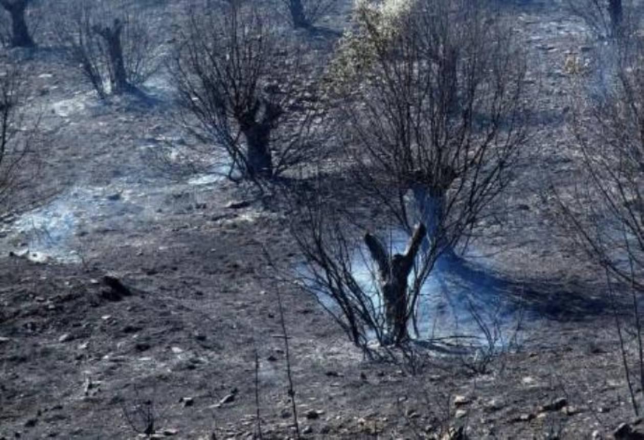 Προφυλακιστέοι δύο αλλοδαποί για την πυρκαγιά στη Σάμο