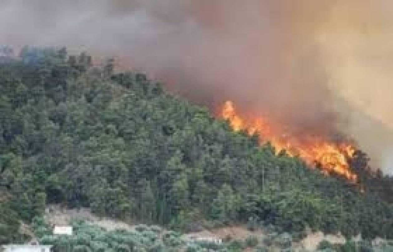 Υπό έλεγχο η φωτιά στην Φλώρινα