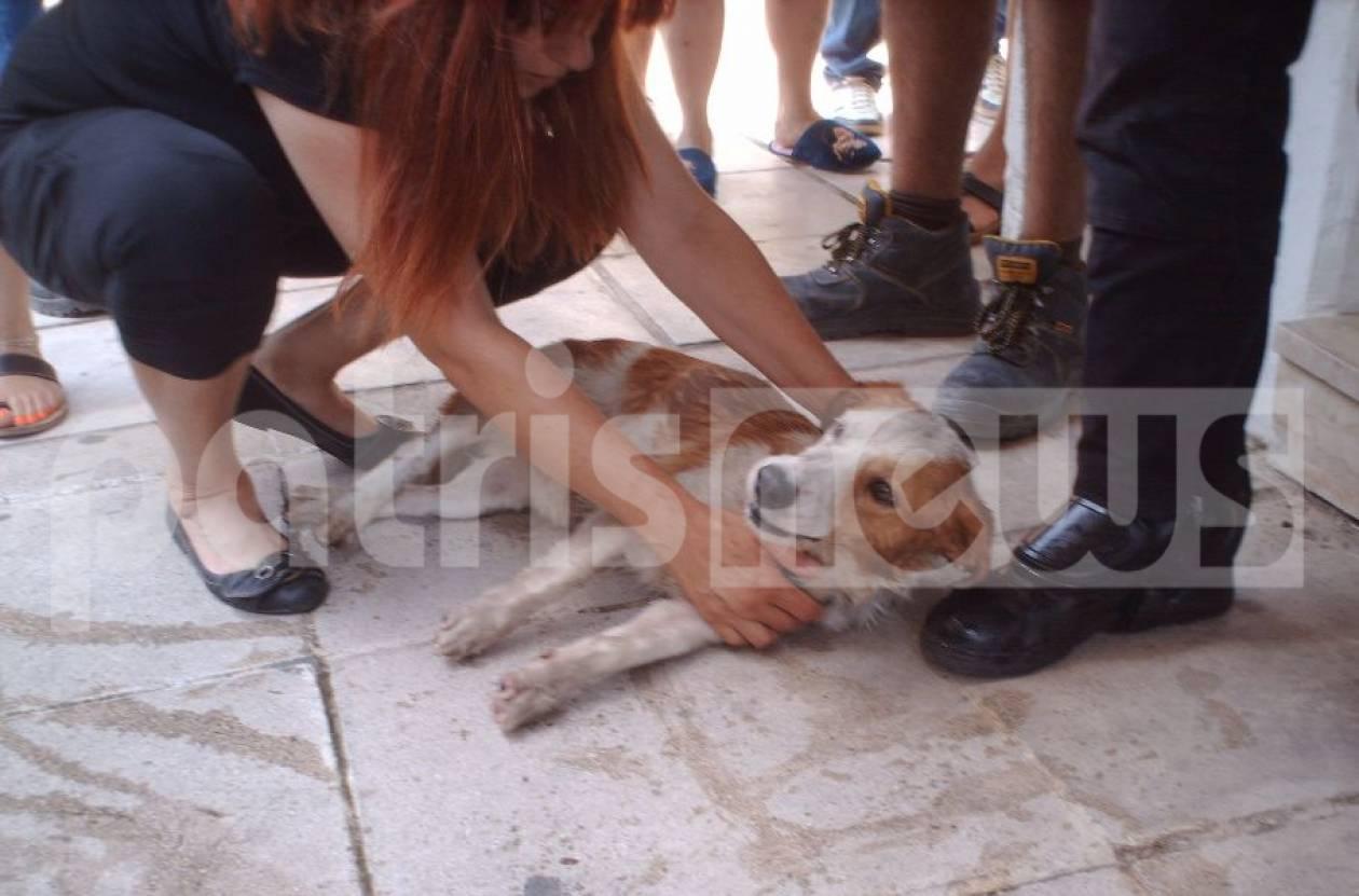 Τραγική αδιαφορία: Παράτησαν τα σκυλιά μέσα στο αμάξι με καύσωνα