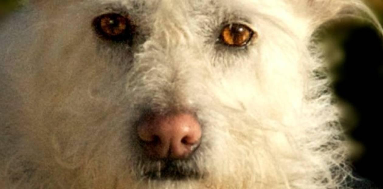 ΣΟΚ: Σκύλος έφαγε τα γεννητικά όργανα του αφεντικού του