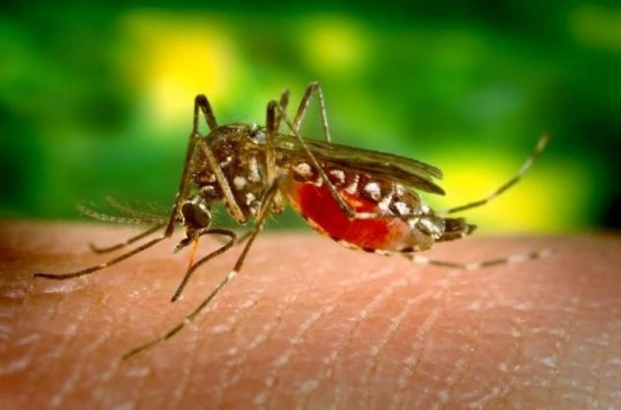Καβάλα: «Έσβησε» ηλικιωμένη από τον ιό του Δυτικού Νείλου