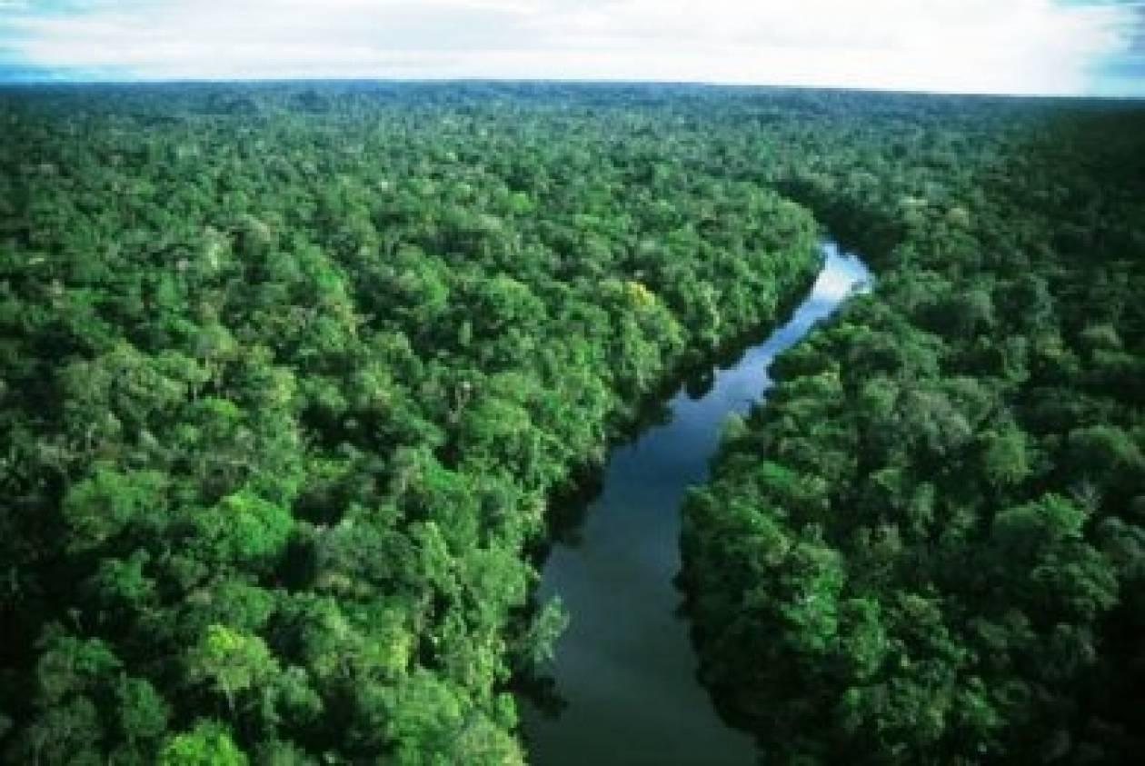 16.000 είδη δέντρων υπάρχουν στον Αμαζόνιο!