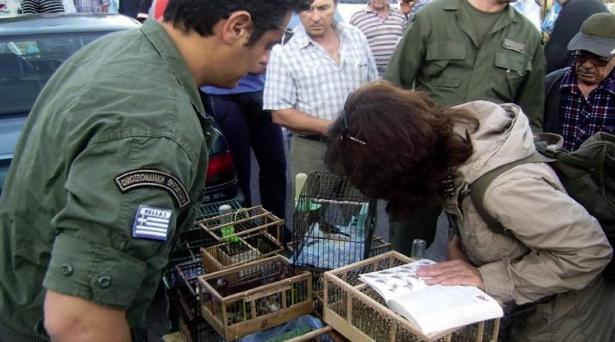 Αστυνομική επιχείρηση σε παράνομο παζάρι ζώων του Σχιστού