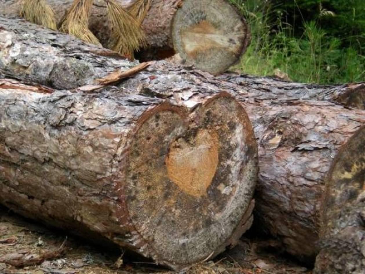 Δεν θα πιστεύετε τι έχει αυτό το δέντρο μέσα στον κορμό του!