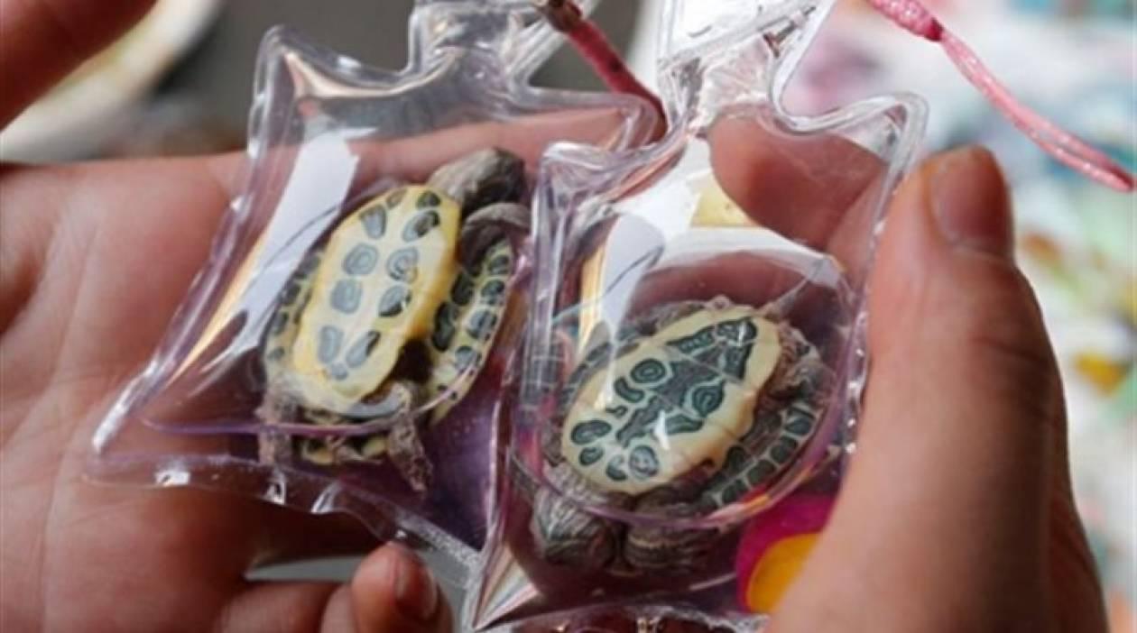 ΣΟΚ: Πουλάνε ζωντανά ζωάκια σε μπρελόκ στην Κίνα