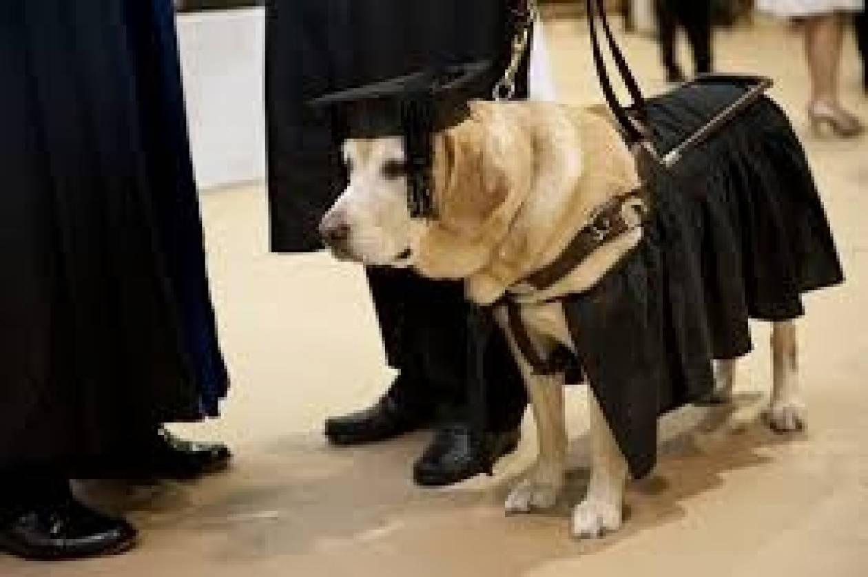 Εκπαίδευση ώρα μηδέν!Πανεπιστήμια δίνουν πτυχία ακόμη και σε σκύλους!