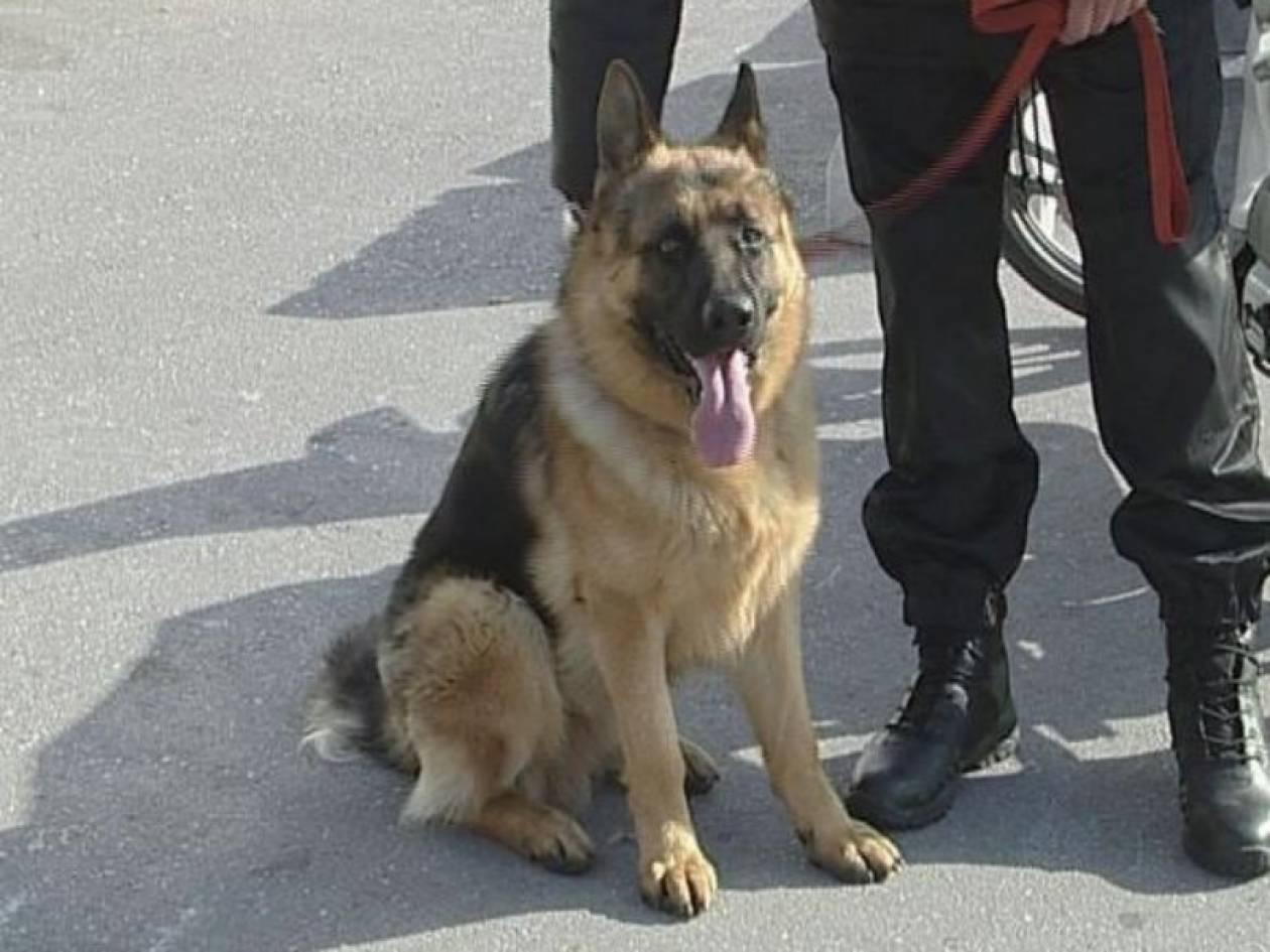 Απομάκρυναν το σκύλο από τον λιμενικό λόγω ...Χρυσής Αυγής