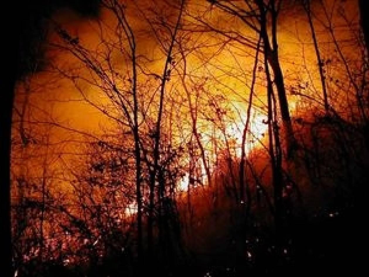 Κάηκε δάσος στο Ρέθυμνο
