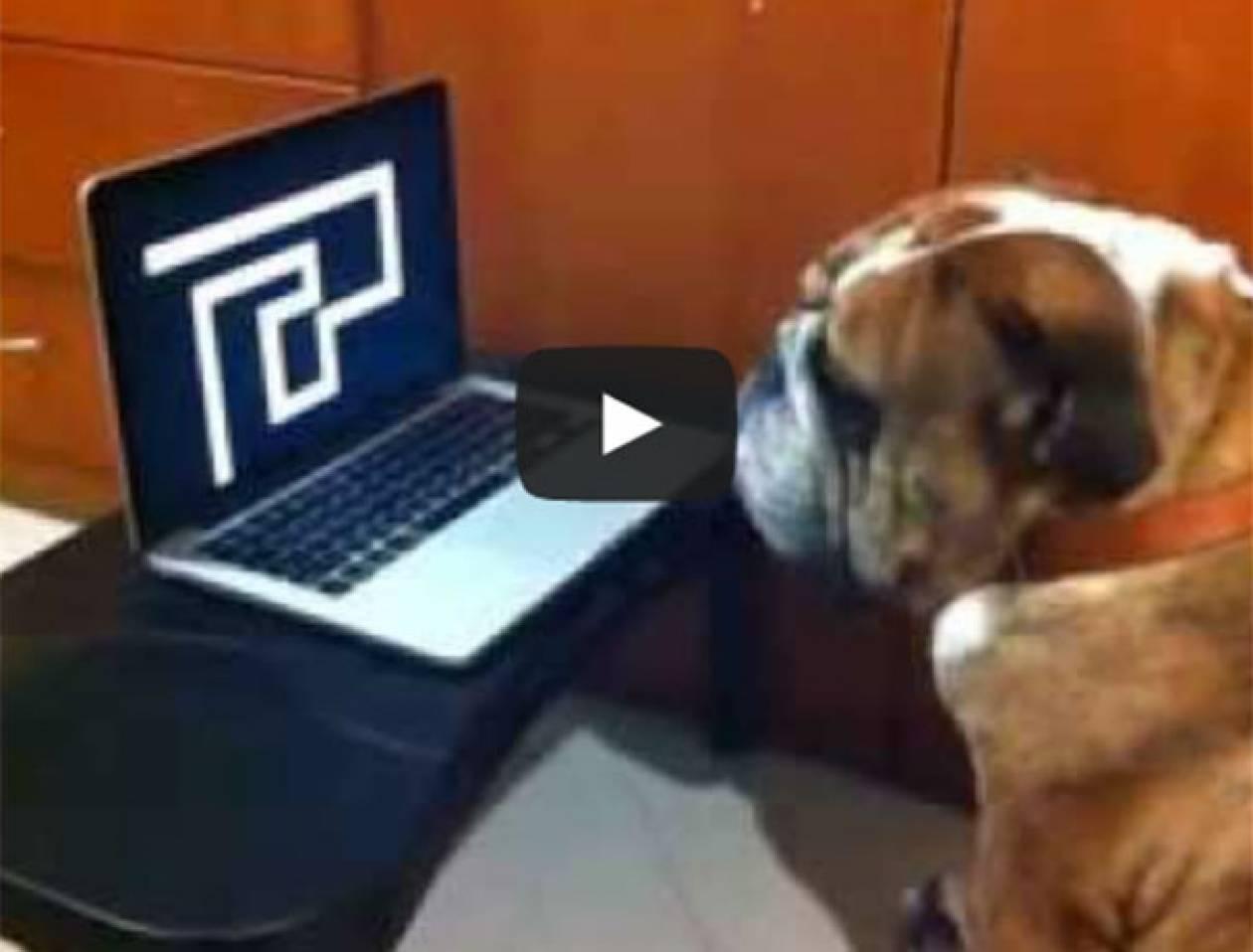 Βίντεο: Σκύλος παρακολουθεί την τρομακτική φάρσα με τον λαβύρινθο