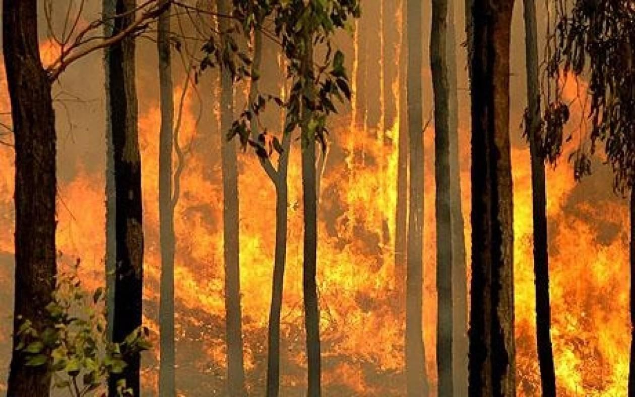 Αυστραλία: Ο καιρός διευκολύνει το έργο των πυροσβεστών