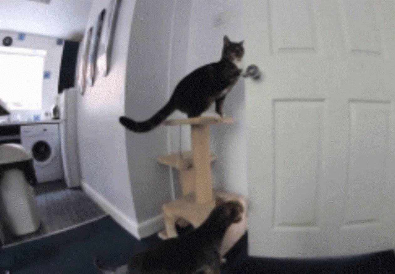 Γάτα και σκύλος συνεργάζονται για να ... αποδράσουν! (vid)