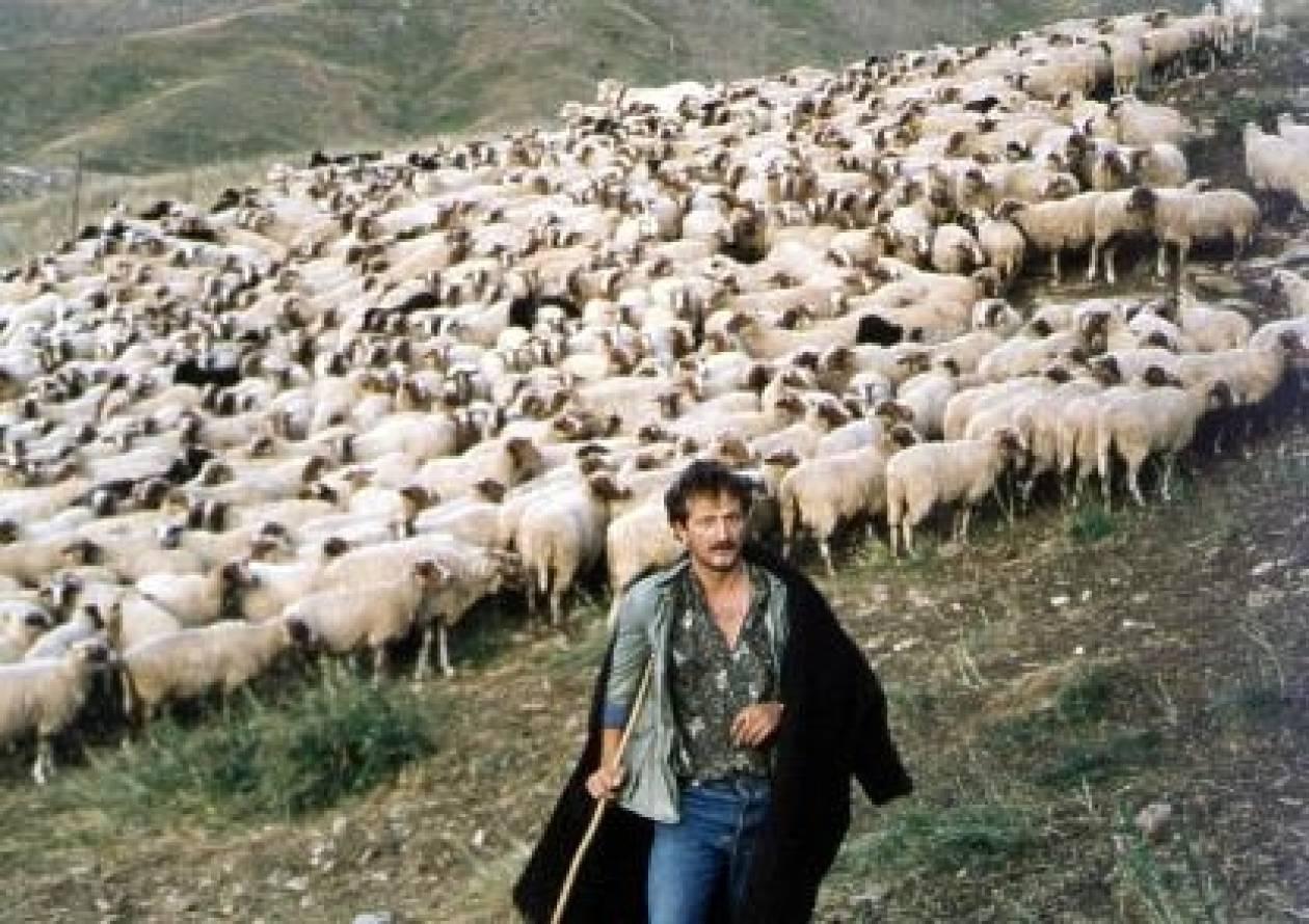 Ηλεία: Σήμα κινδύνου εκπέμπει η κτηνοτροφία