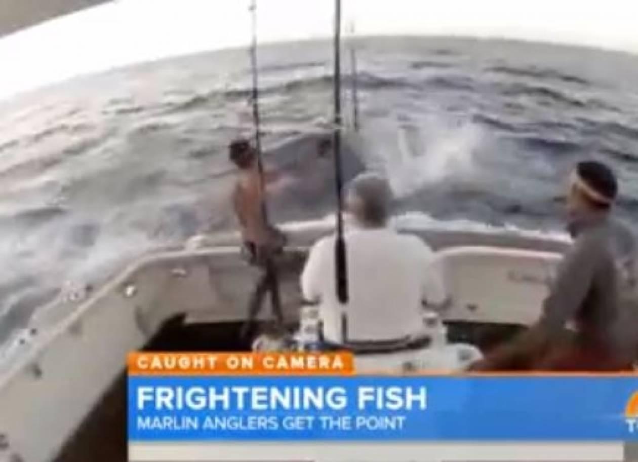 Ψαράς βουτά στη θάλασσα για να γλιτώσει από ξιφία