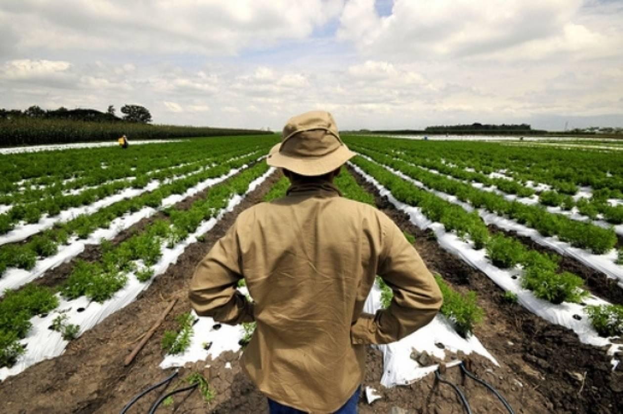 Βλέπει μέλλον στην στέβια το Υπ. Αγροτικής Ανάπτυξης