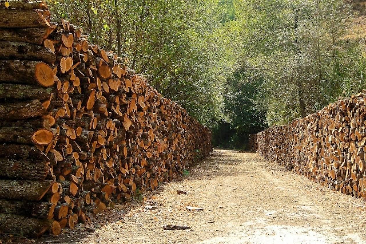 Μόνο στο 30% η διαχείριση της ξυλείας που μπορεί να παράγει η χώρα