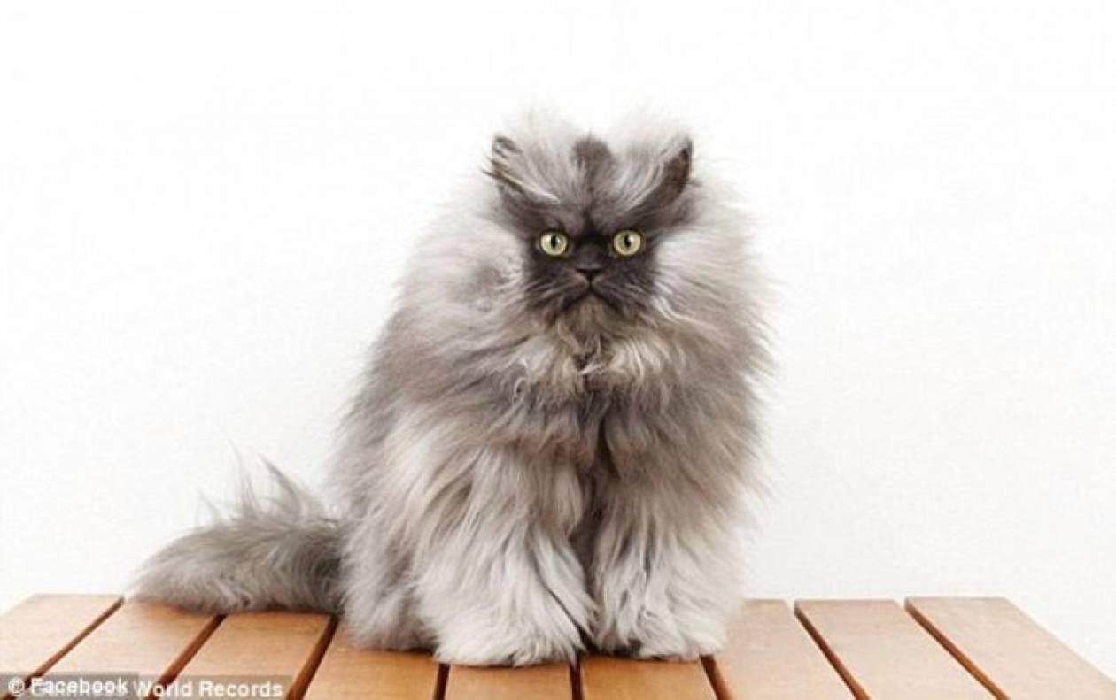 Έφυγε από τη ζωή ο «πιο θυμωμένος γάτος»