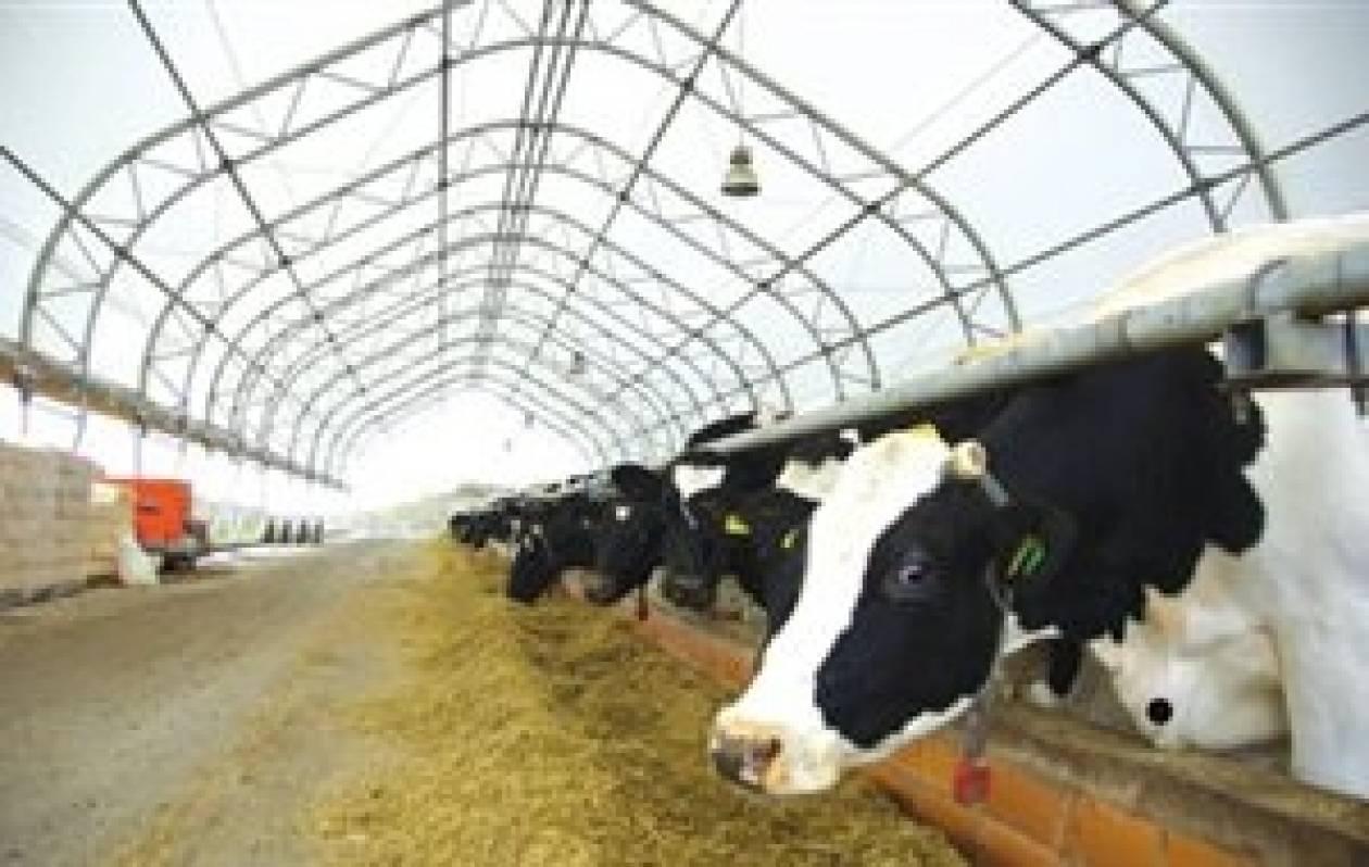 Επένδυση στην εκπαίδευσή τους επιθυμούν οι νέοι κτηνοτρόφοι