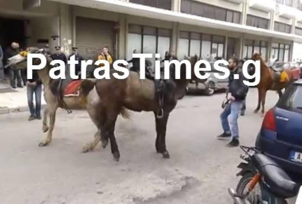 Μην το χάσετε: Άλογο ερωτεύθηκε φοράδα σε μπλόκο των αγροτών! (vid)
