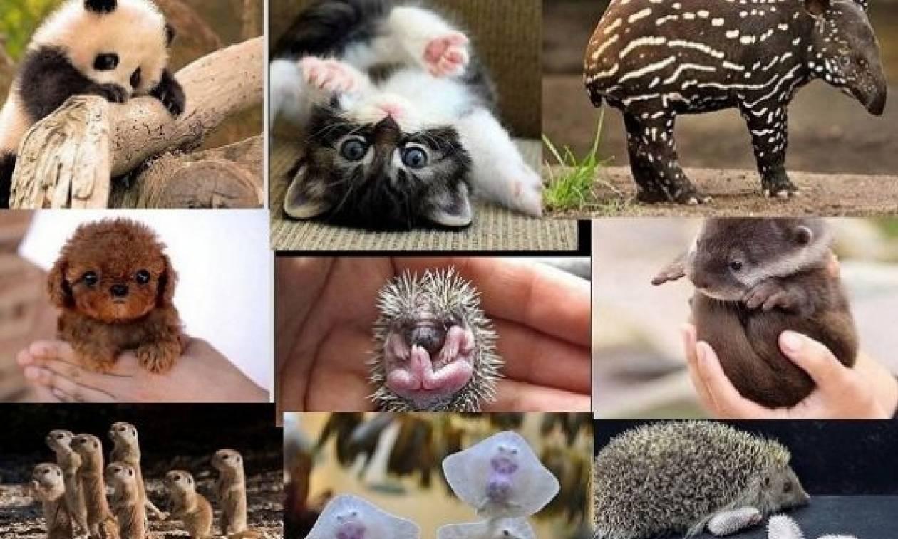 Αυτά τα νεογέννητα ζωάκια, μας έχουν κλέψει την καρδιά!