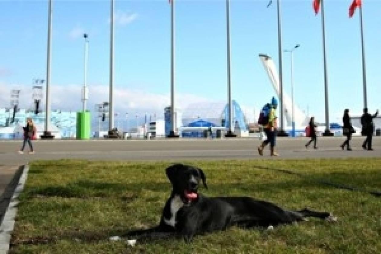 Αντιδράσεις για την εξόντωση των αδέσποτων ζώων στο Σότσι
