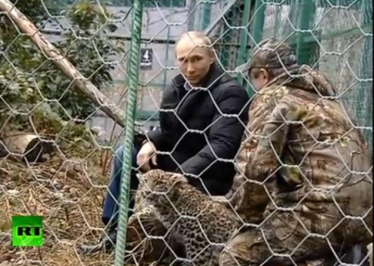 Σε κλουβί με λεοπαρδάλεις μπήκε ο Πούτιν (vid)