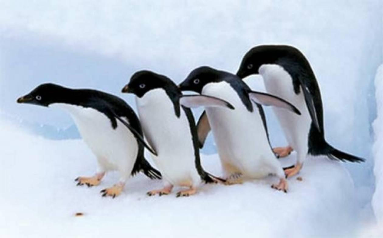 Απίστευτο:Αναγκάστηκαν να δώσουν αντικαταθλιπτικά στους πιγκουίνους...