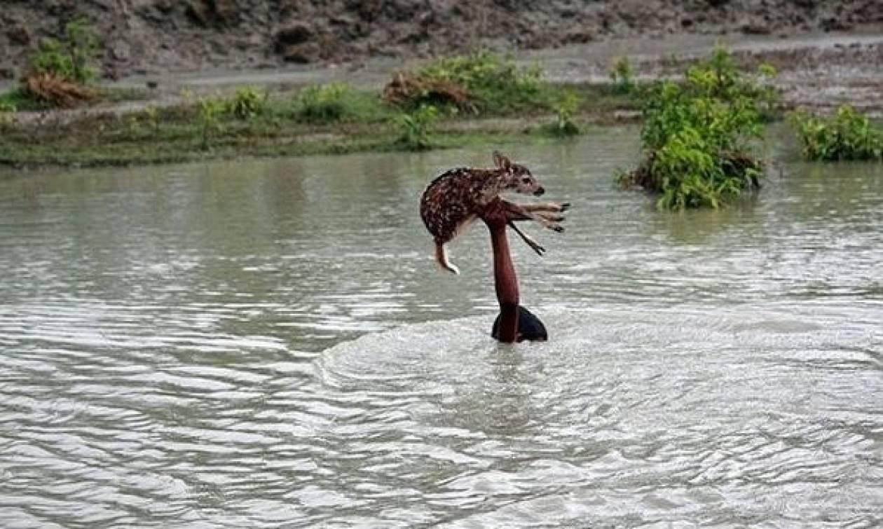 Αγόρι βούτηξε σε ορμητικά νερά για να σώσει μωρό ελαφάκι