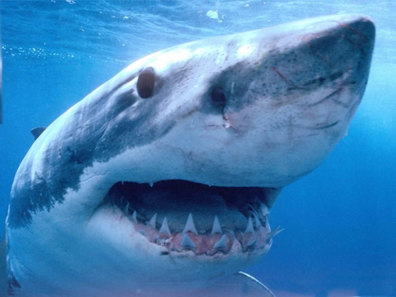 Αυστραλία: Καρχαρίας άρπαξε 28χρονο ψαροντουφεκά