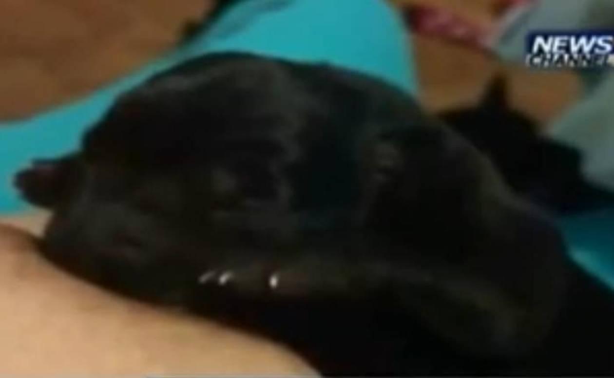 Γυναίκα θήλασε κουτάβι και του έσωσε τη ζωή (βίντεο)