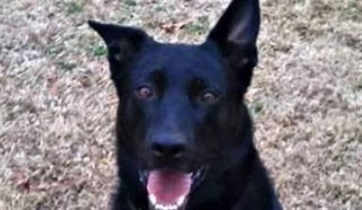 Απέλυσαν αστυνομικό σκύλο λόγω... τεμπελιάς!
