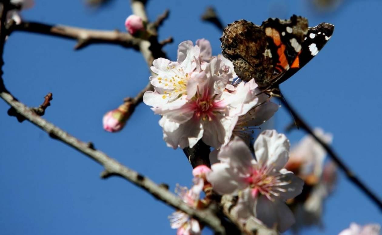 Μια πεταλούδα φέρνει την Άνοιξη (Pics)