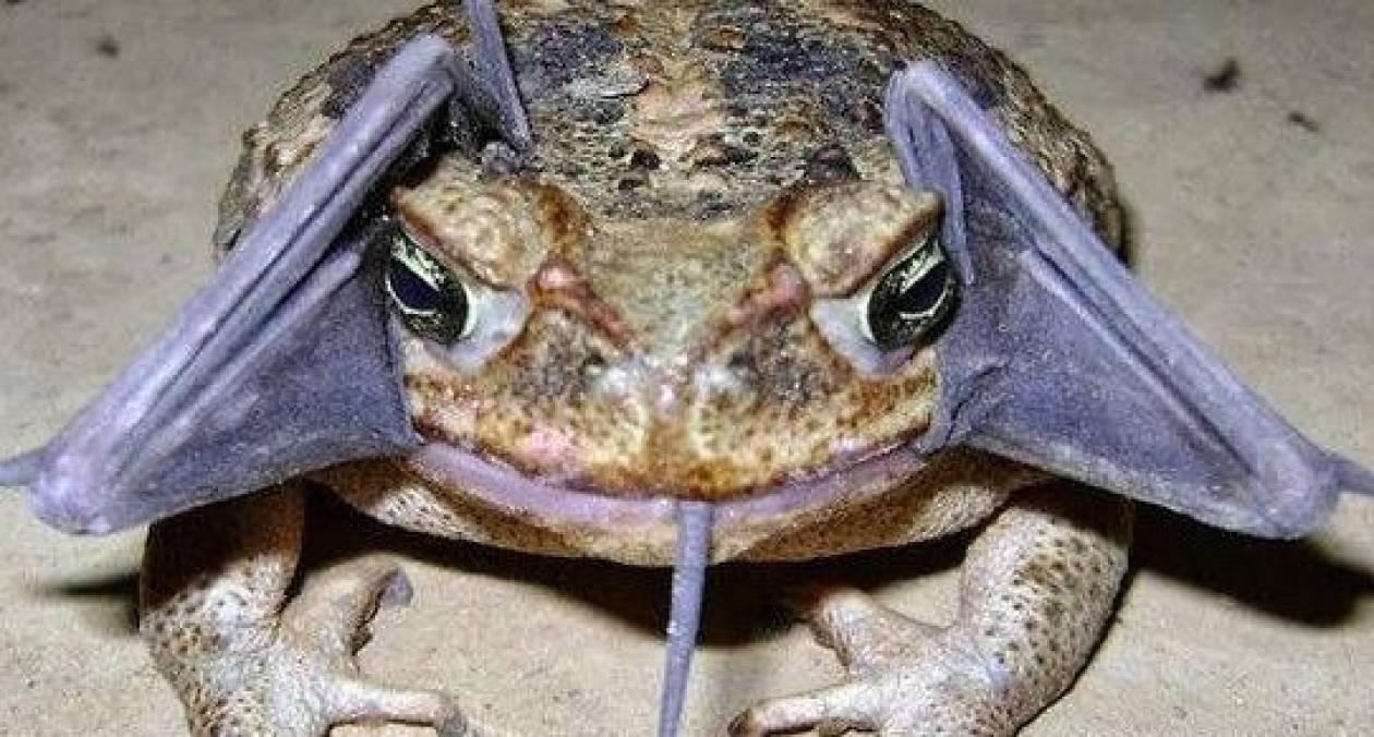 Δεν μπορείτε να φανταστείτε τι έχει ο βάτραχος στο στόμα του