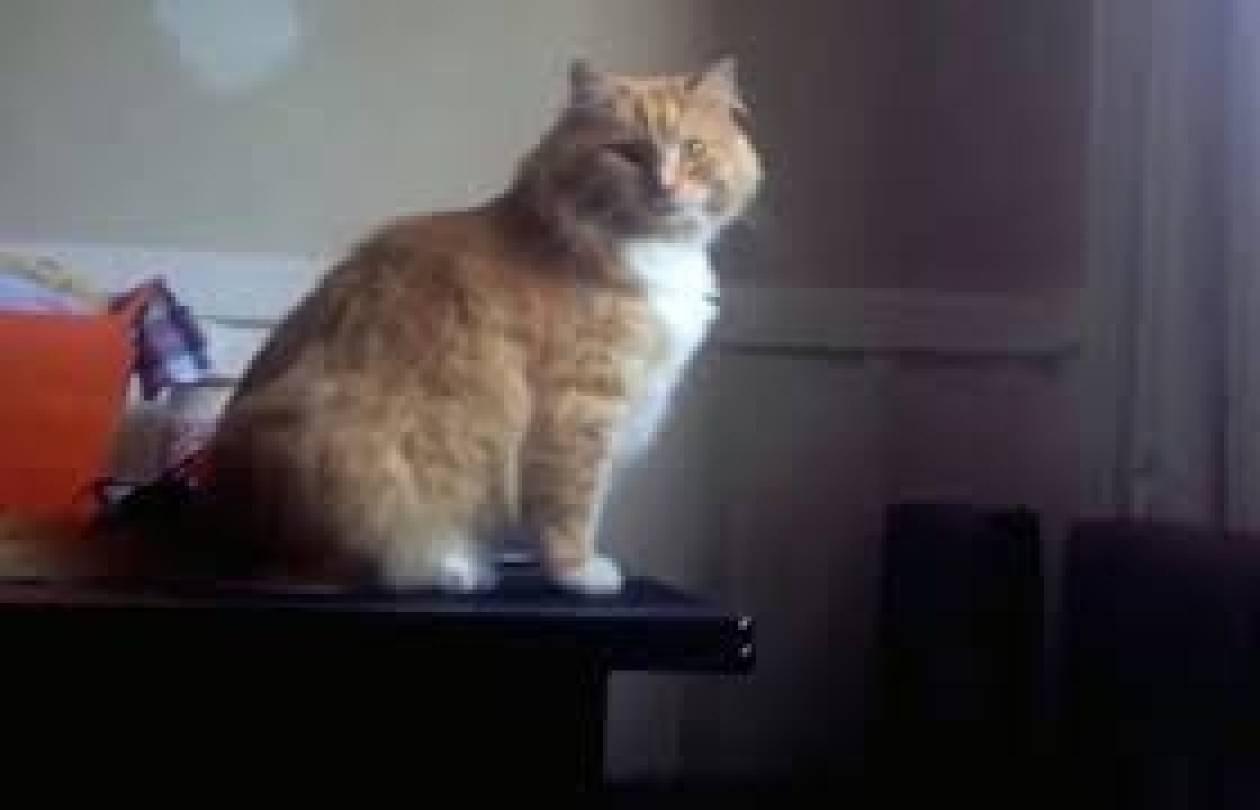 Επικό FAIL γάτας που σαρώνει στο YouTube: Δείτε τι έπαθε!